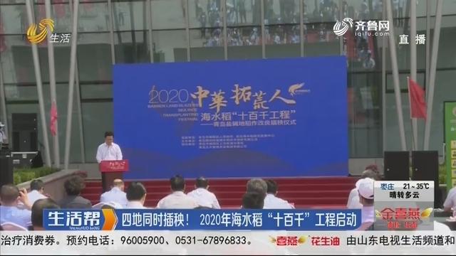 """青岛:四地同时插秧!2020年海水稻""""十百千""""工程启动"""