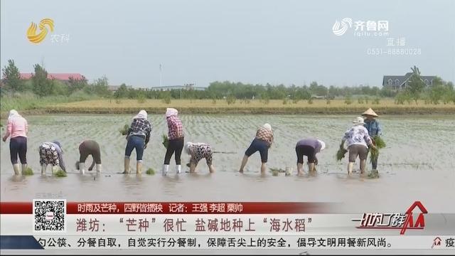 """潍坊:""""芒种""""很忙 盐碱地种上""""海水稻"""""""
