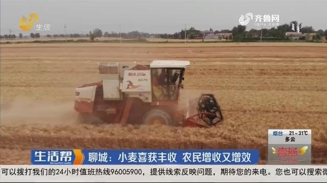 聊城:小麦喜获丰收 农民增收又增效