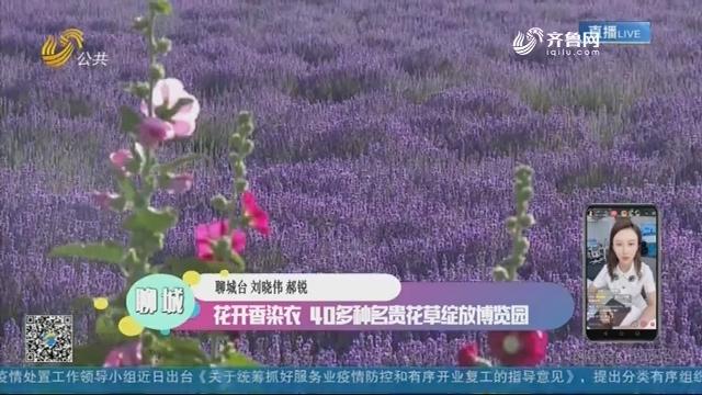 聊城:花开香染衣 40多种名贵花草绽放博览园