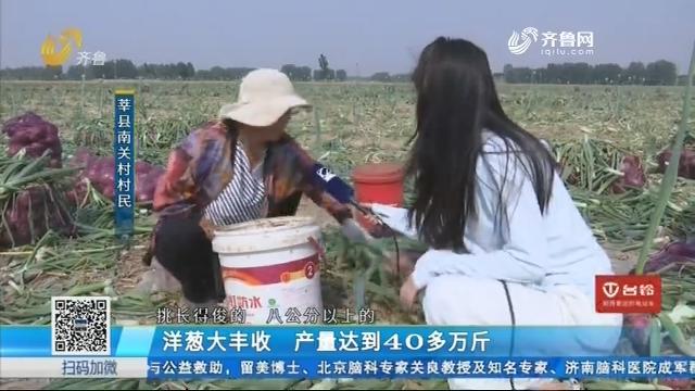 莘县:洋葱大丰收 产量达到40多万斤