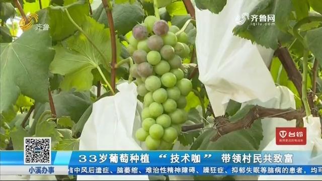 """33岁葡萄种植 """"技术咖""""带领村民共致富"""