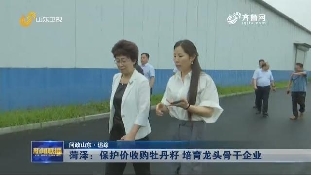 【问政山东·追踪】菏泽:保护价收购牡丹籽 培育龙头骨干企业