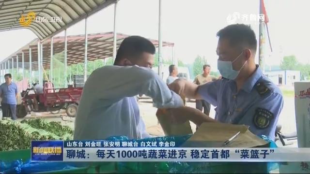"""聊城:每天1000吨蔬菜进京 稳定首都""""菜篮子"""""""
