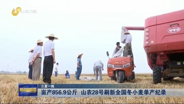 【三夏一线】亩产856.9公斤 山农28号刷新全国冬小麦单产纪录