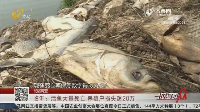 【记者调查】临沂:活鱼大量死亡 养殖户损失超20万