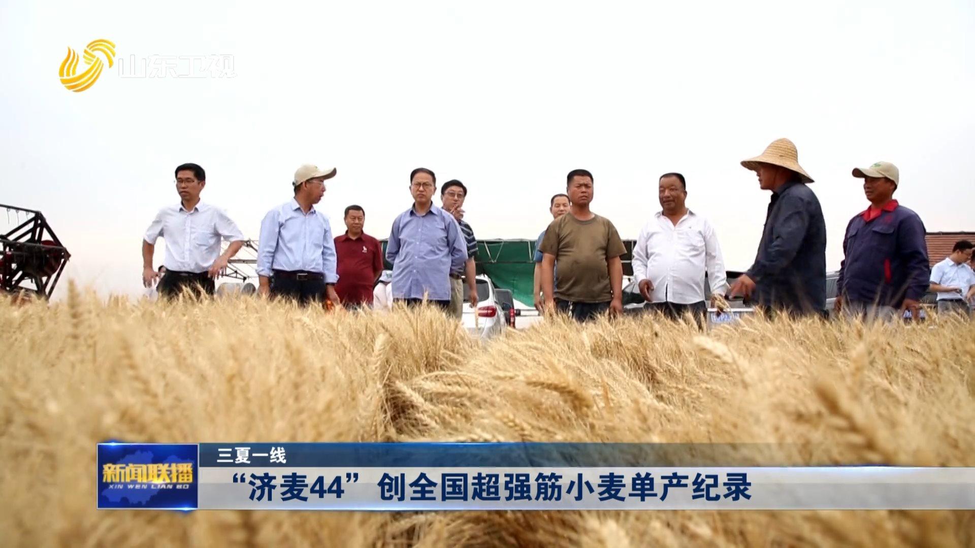 """【三夏一线】""""济麦44""""创全国超强筋小麦单产纪录"""