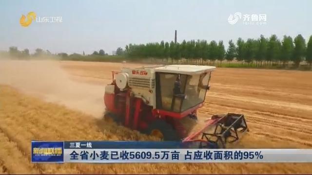 【三夏一线】全省小麦已收5609.5万亩 占应收面积的95%