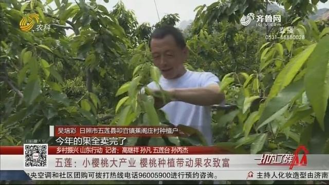 五莲:小樱桃大产业 樱桃种植带动果农致富
