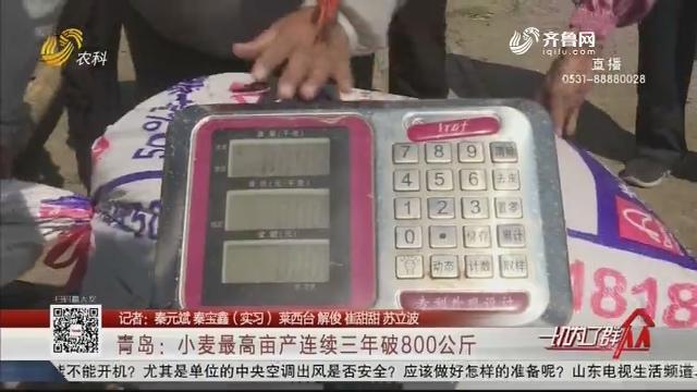 青岛:小麦最高亩产连续三年破800公斤