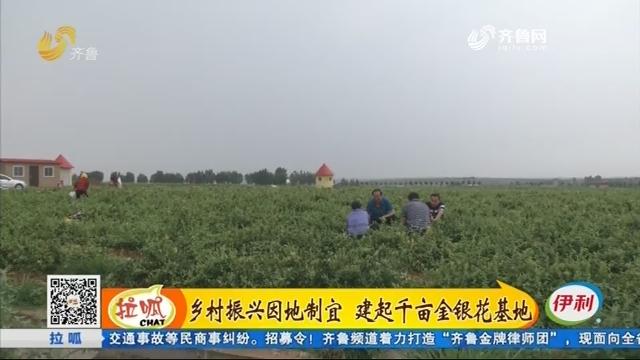 青岛:乡村振兴因地制宜 建起千亩金银花基地