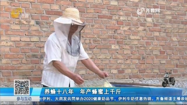 乐陵:养蜂十八年 年产蜂蜜上千斤