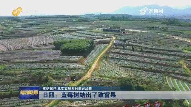 【牢记嘱托 扎实实施乡村振兴战略】日照:蓝莓树结出了致富果