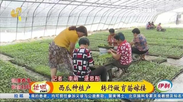 济南:西瓜种植户 转行做育苗嫁接