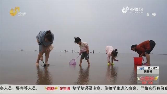 东营垦利:赶海拾贝节 端午嗨起来