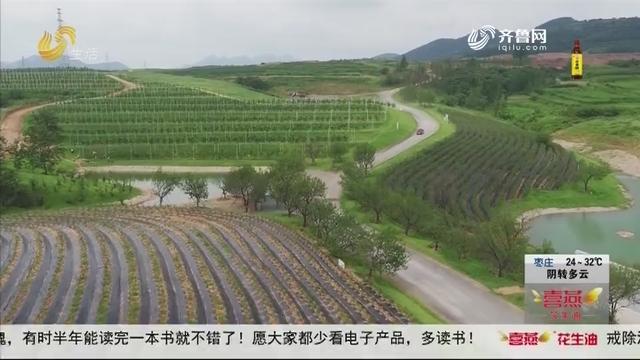"""日照:山村建生态农场 """"出门打工""""变""""在家致富"""""""