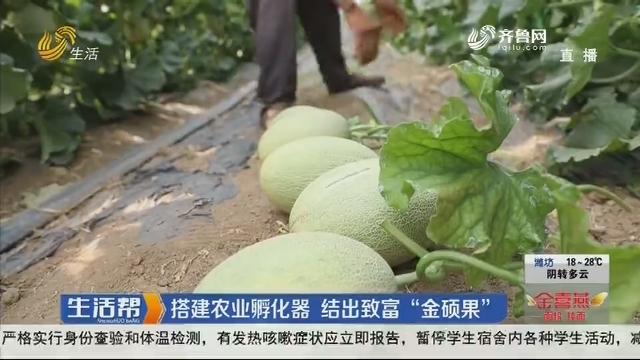 """临沂:搭建农业孵化器 结出致富""""金硕果"""""""