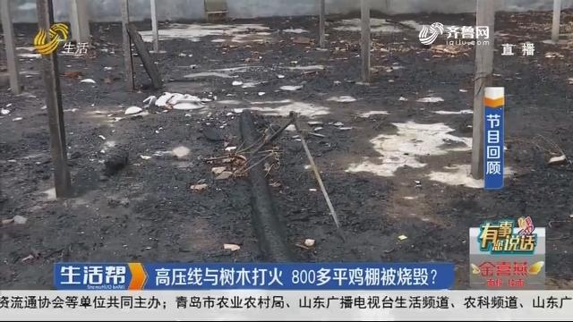 潍坊:高压线与树木打火 800多平鸡棚被烧毁?
