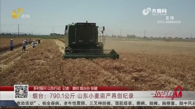【乡村振兴 山东行动】烟台:790.1公斤 山东小麦亩产再创纪录
