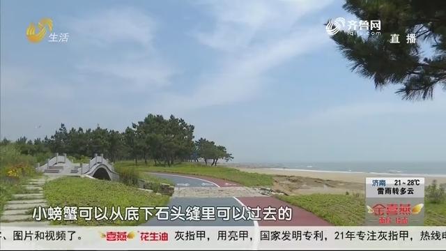 日照:阳光海岸绿道启用 滨海岸线全部免费开放
