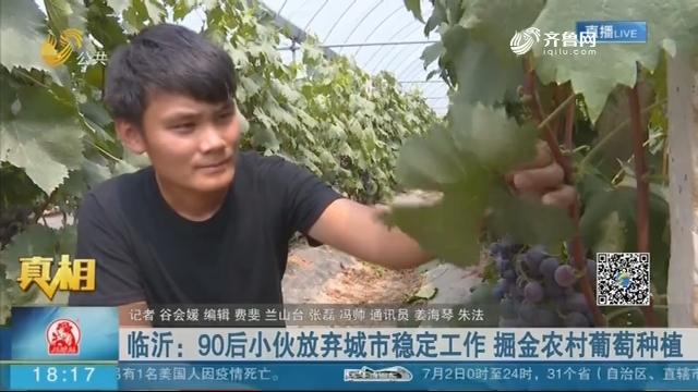 【真相】临沂:90后小伙放弃城市稳定工作 掘金农村葡萄种植