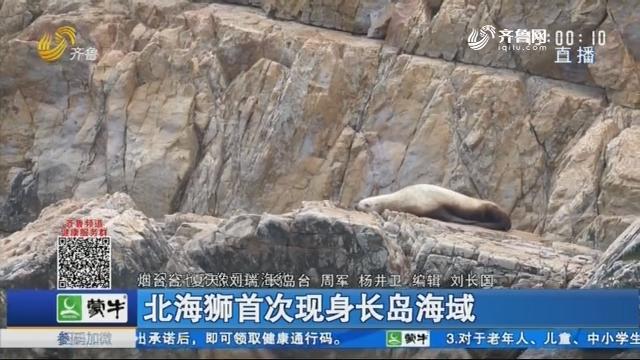 北海狮首次现身长岛海域
