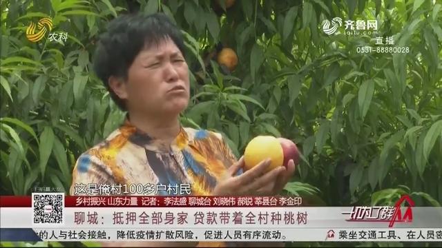 【乡村振兴 山东力量】聊城:抵押全部身家 贷款带着全村种桃树