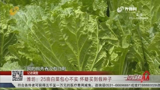 【记者调查】潍坊:25亩白菜包心不实 怀疑买到假种子