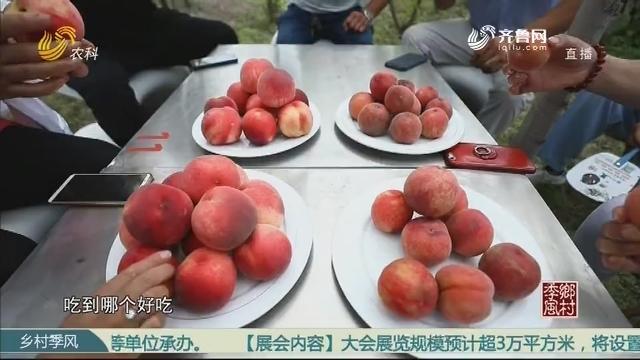 土法种桃 只为儿时的味道