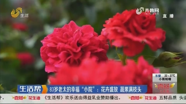 """83岁老太的幸福""""小院"""":花卉盛放 蔬果满枝头"""