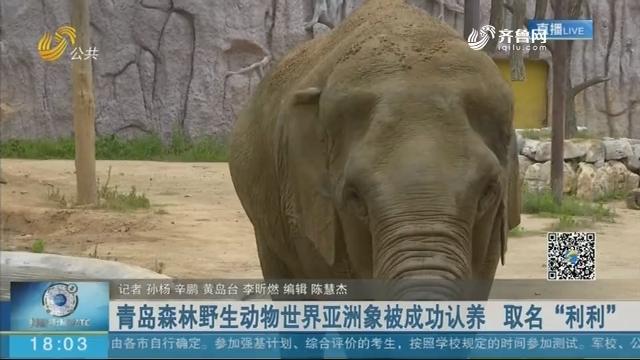 """青岛森林野生动物世界亚洲象被成功认养 取名""""利利"""""""