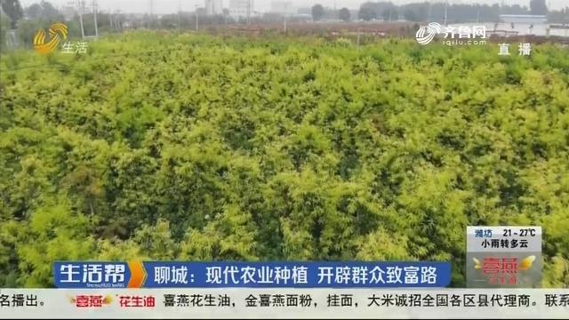聊城:现代农业种植 开辟群众致富路