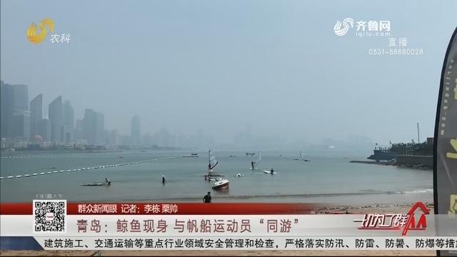 """【群众新闻眼】青岛:鲸鱼现身 与帆船运动员""""同游"""""""