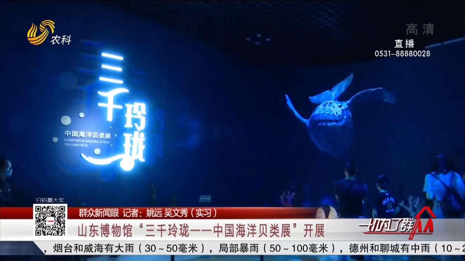"""【群众新闻眼】山东博物馆""""三千玲珑——中国海洋贝类展""""开展"""