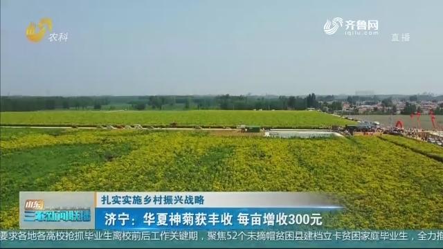 【扎实实施乡村振兴战略】济宁:华夏神菊获丰收 每亩增收300元