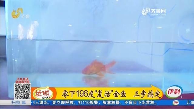"""零下196度""""复活""""金鱼 三步搞定"""