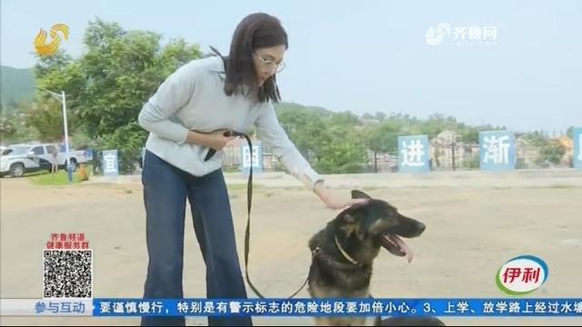 泰安:惊呆!警犬各个有绝技