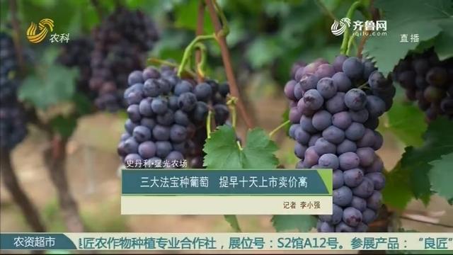 【史丹利·星光農場】三大法寶種葡萄 提早十天上市賣價高