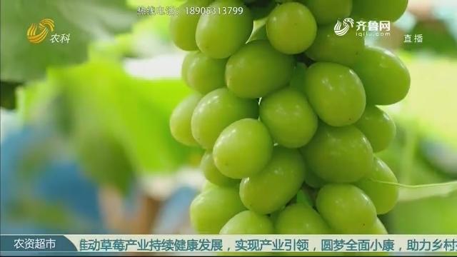 """【紫牛超牛经销商】农资有道 """"贵""""在品质"""