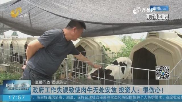 政府工作失误致使肉牛无处安放 投资人:很伤心!