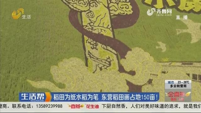稻田为纸水稻为笔 东营稻田画占地150亩!