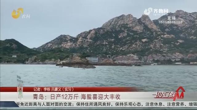 青岛:日产12万斤 海蜇喜迎大丰收