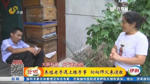蒙阴:养殖老手遇上棘手事 忙向师父来请教