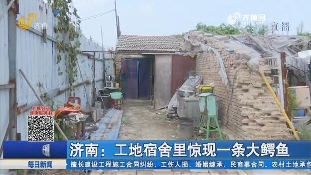 济南:工地宿舍里惊现一条大鳄鱼