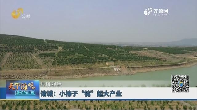 """【县域观察】诸城:小榛子""""链""""起大产业"""