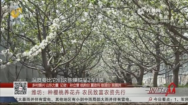 【鄉村振興 山東力量】濰坊:種櫻桃養花卉 農民致富農資先行