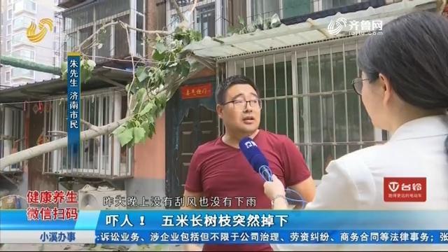 济南:吓人!五米长树枝突然掉下