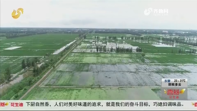【防汛进行时】济宁鱼台:50多万亩农田内涝 135座排灌站昼夜排涝