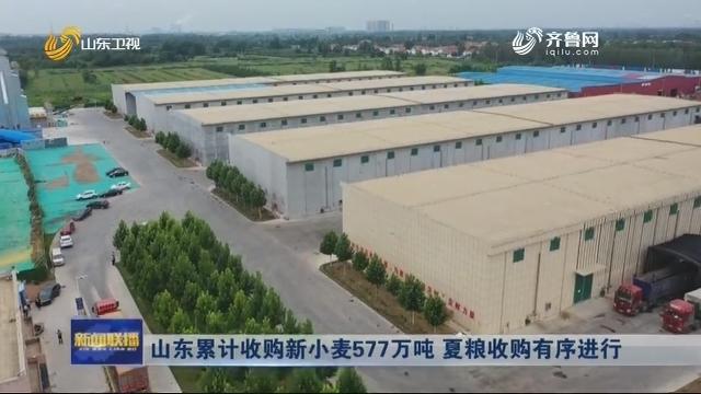 山东累计收购新小麦577万吨 夏粮收购有序进行