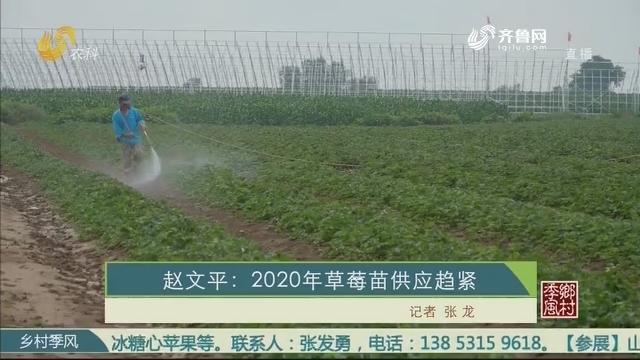 赵文平:2020年草莓苗供应趋紧